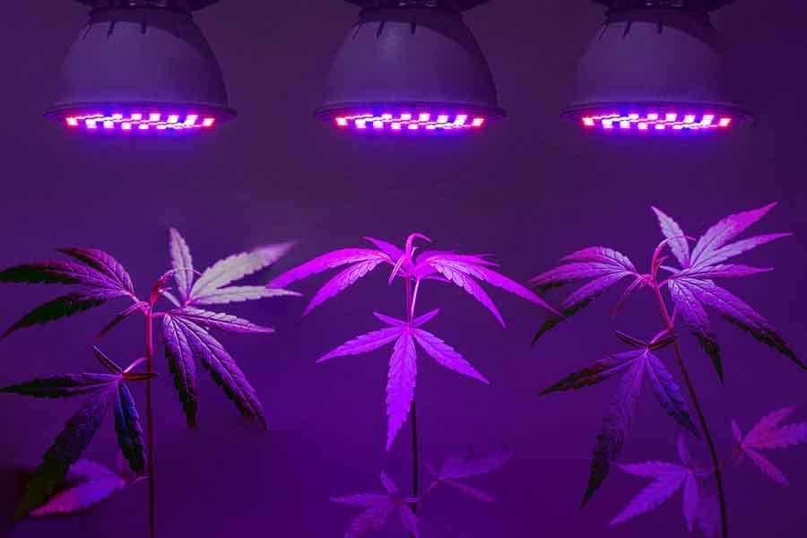 Cannabis beleuchten