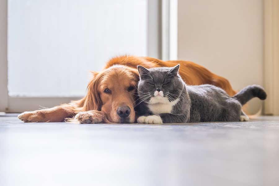 Animali rilassati